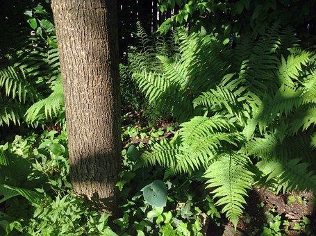Fern, Garden, Nature, Plant, Tree, Bark, Linden, Linde