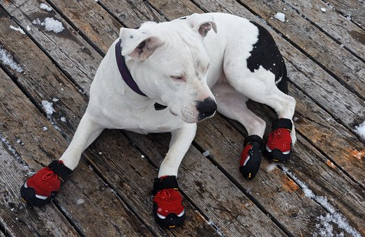Dog, Animal, Pet, Shoes, Red, Snow Shoes, Winter