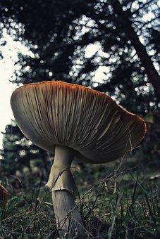Fungus, Mushroom, Fungi, Nature, Plant, Forest, Wild
