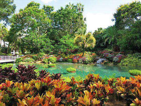 Seaworld, Florida, Usa, Paradise, Plant, Lagoon