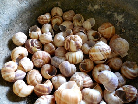 Snail, Shells, Animal, Spiral, Nature, White, Macro