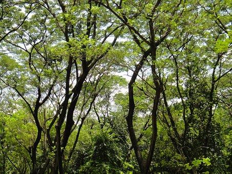 Trees, Root, Nature, Beautiful, Tropic, Tropical