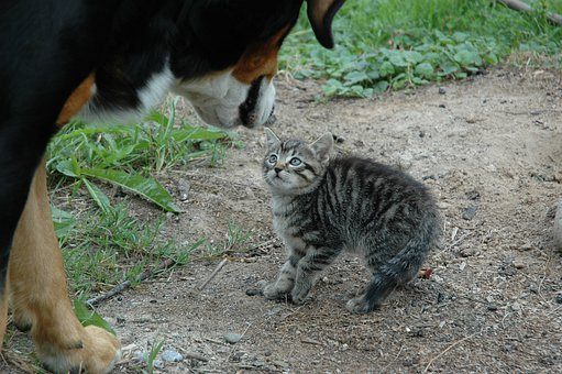 Cat, Young, Dog, Encounter, Sniff, Fear, Scare