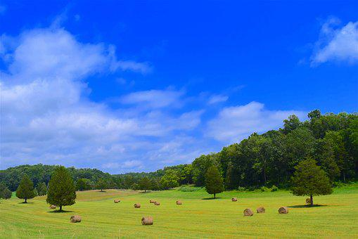 Field, Hay Bales, Trees, Hay, Farm, Agriculture