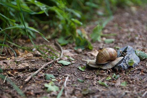 Snail, Nature, Mollusk, Shell, Animal, Garden, Slowly