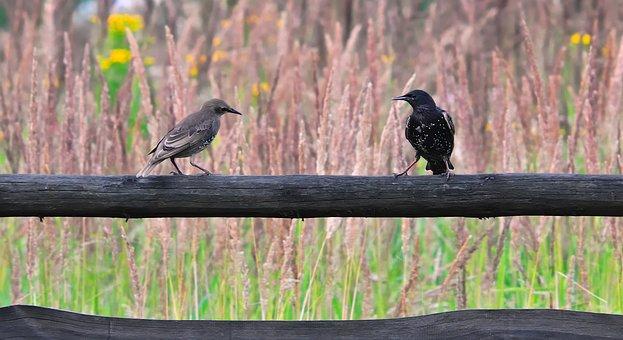 Braids, Birds, Meeting, Conversation, Para, Nature