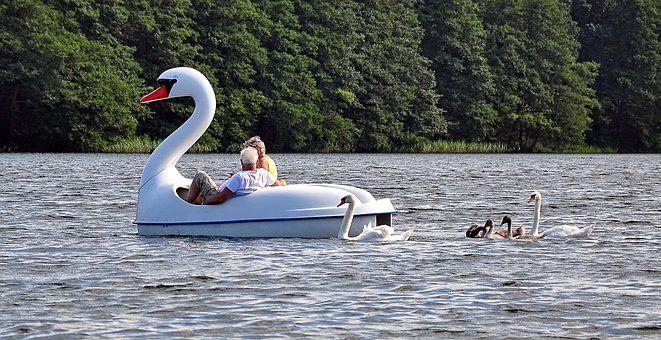 Swan, Leader, Boat, Lake, Shape, Luring, Tracking