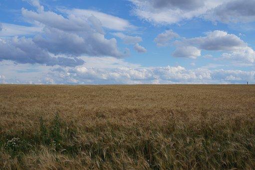 Field, Landscape, Nature, Cereals, Arable, Agriculture