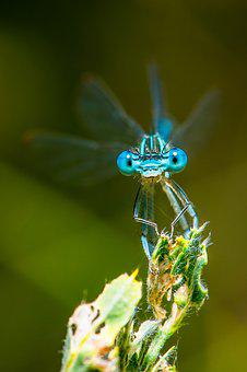 Dragonfly, Macro, Insect, Nature, Close, Compound