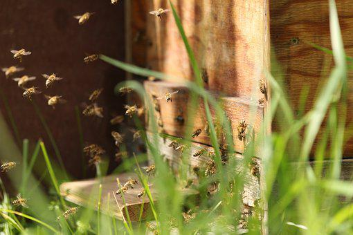 Bees, Hard Working, Fly, Close, Nature, Collect, Insect