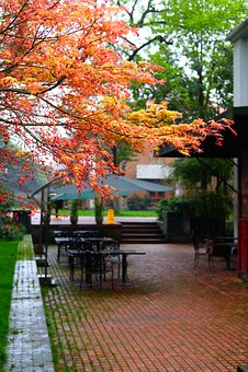Acer Palmatum, Maple, Red Leaves, Plant, Street Corner