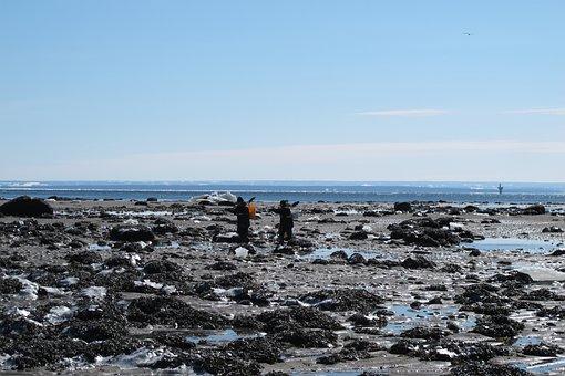 Canada, Winter, Sea, Shell Seekers, Beach