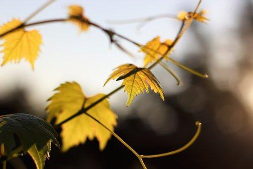 Autumn, Nature, Foliage, Background, Natural, White