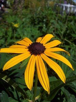 Petal, Yellow, Flowers, Flower, Plant, Yellow Flower