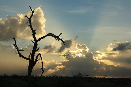 African Sunset, Silver Lining, Dead Tree