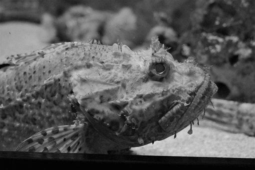 Fish, Aquarium, Under Water Creatures, Sea