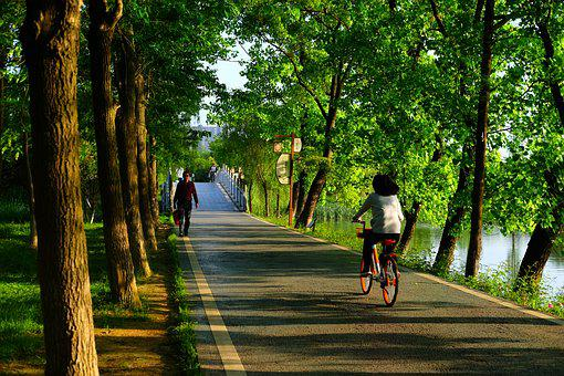 The Scenery, Cycle, Figure, Trail, Woods