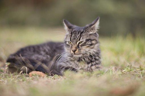 Cat, Animal, Grass, Cat Eye, Animal Portrait, Kitty