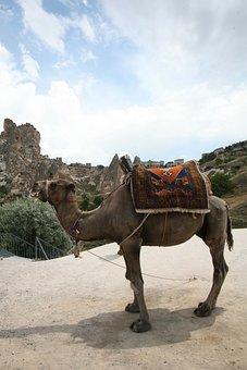 Cappadocia, Turkey, Landscape, Camel
