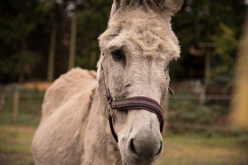 Donkey, Nature, Coupling, Animal, Meadow, Wise Donkey