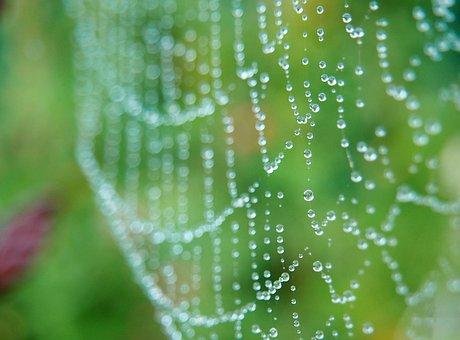 Cobweb, Morgentau, Network, Dew, Dewdrop, Drip, Beaded