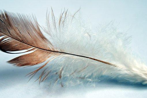 Feather, Single, Bird, Wing, Nature, Animal, White, One