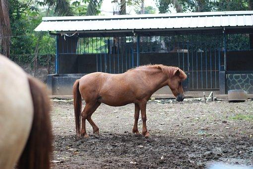 Horse, Wildlife, Nat Geo, Planet Animals, Geo Wild