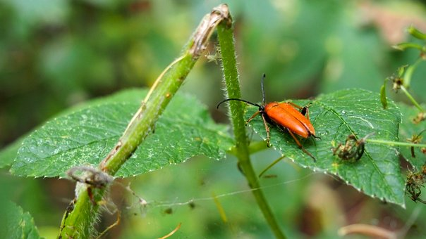 Animals, Insect, Nature, The Beetles, Macro