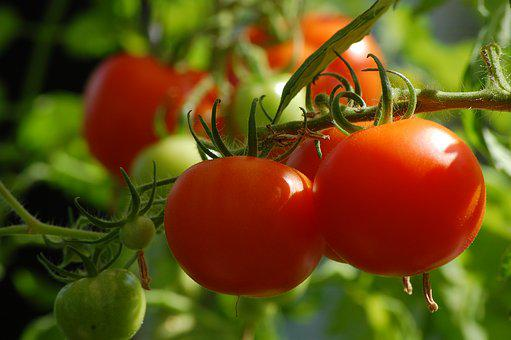 Tomato, Plant, Food, Vegetables, Vegetable Growing