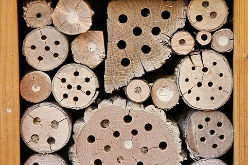 Insect Hotel, Wood, Shelter, Perforated, Insect House