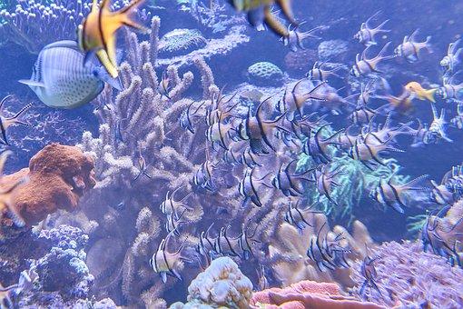 Aquarium, Fish, Underwater World, Coral, Sea fish