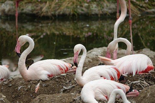 Flamingo, Bird, Africa, Safari, National Park
