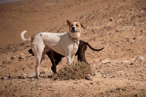 Dogs, Pet, Desert, Animal, White, Cute, Canine, Cat