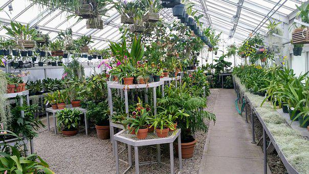 Greenhouse, Indoor, Green House, Plants, Plant, Flowers