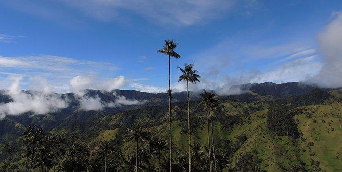 Landscape, Salento, Palm Wax, Cordillera