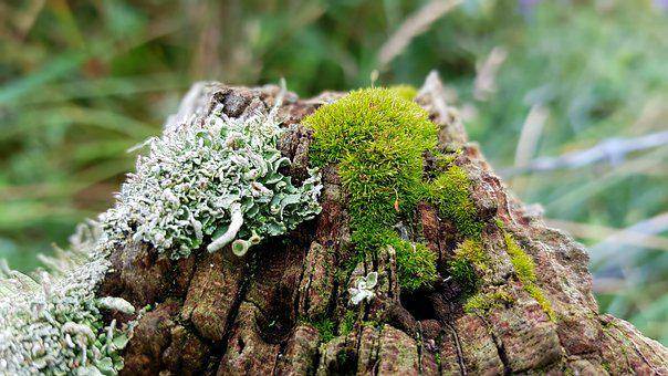 Moss, Weave, Fence Post, Wood, Weathered, Bemoost