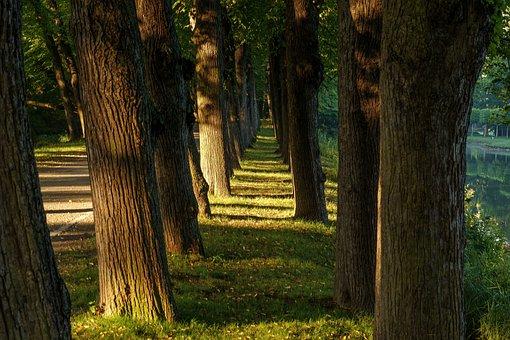 Trees, Vanishing Point, Away, Landscape, Forest, Park