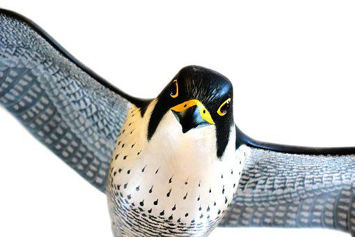 Peregrine, Falcon, Bird, Model, Falco, Peregrinus
