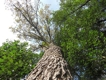 Tree, Nature, Tree Frog Perspective