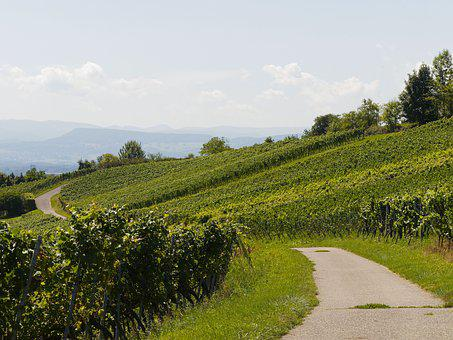 Vines, Vineyards, Grapes, Grape, Burgundy, Nature