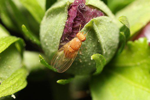 Fly, Transparent, Plant, Green, Leaf, Insect, Animal