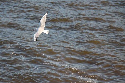 Seagull, Birds, Animals, Water Bird, Close Up, Water