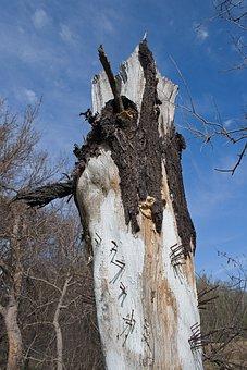 Art, Tree Stump, Trunk, Nails, Park