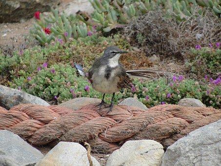 Strandlooper, Bird, Bird On Rope