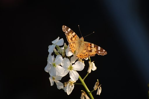 Butterfly, Blossom, Bloom, Nature, Close, Summer