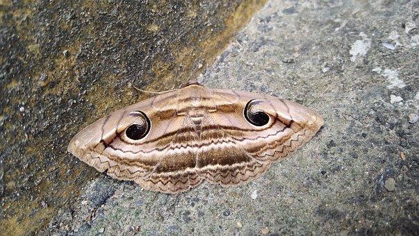 Butterfly, Eye, Strange