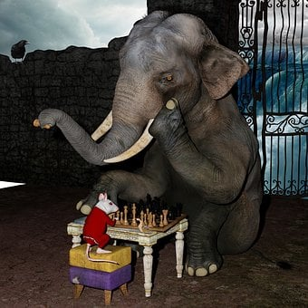Play Chess, Elephant, Mouse, Snail, Fantasy, Waterfall