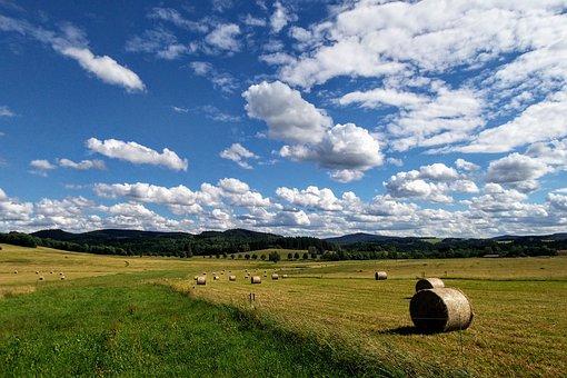 Meadow, Field, Heaven, Nature, Landscape, Sky, Grass