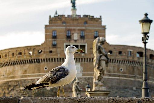 Rome, Castel Sant'angelo, Seagull, Italy, Capital