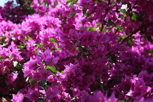 Flower, Summer, Purple, Blossom, Bloom, Italy, Nature